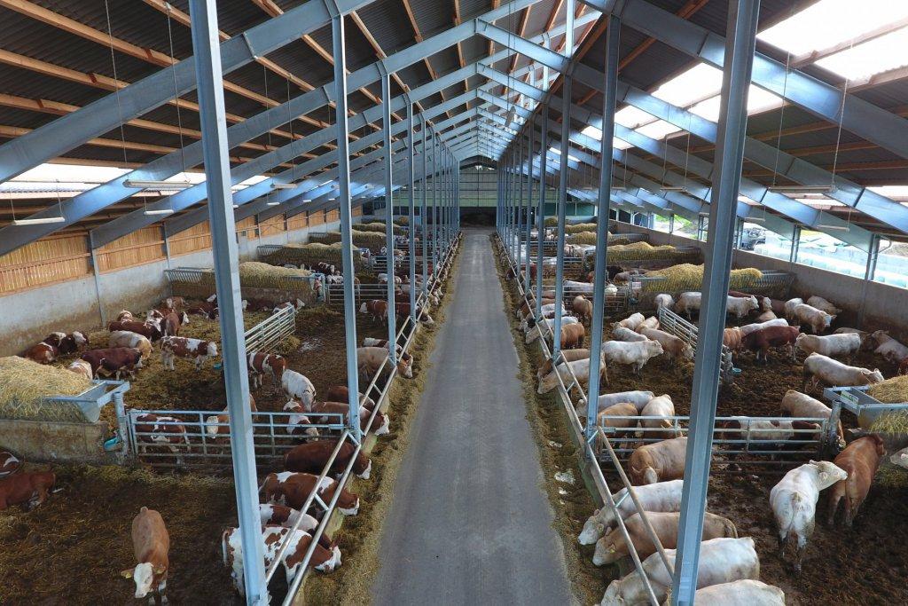 Bullenmaststall für 350 Tiere 2