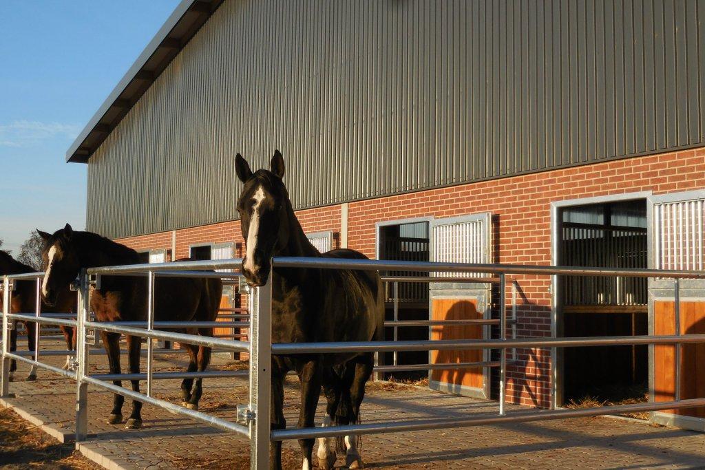 Pferdestall mit Paddocks Velbert 3