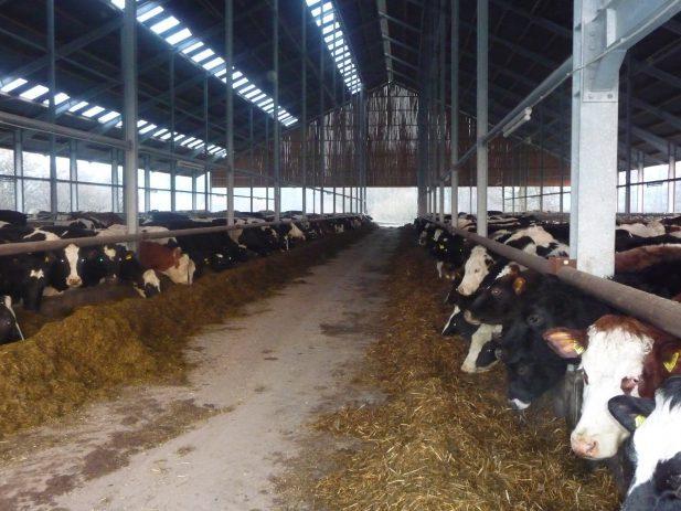 Milchviehstall Stadtlohn 1