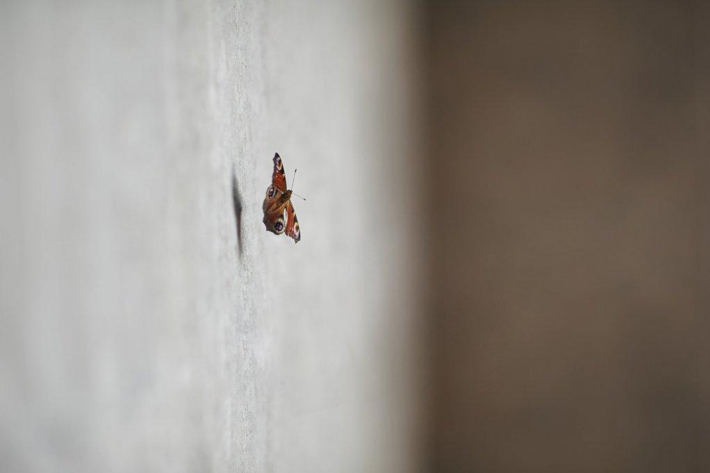 Wir fliegen auf glatte Wände