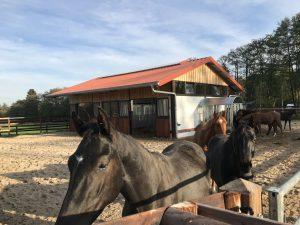 Weidestall mit Pferde